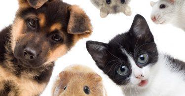 hayvanlari-koruma-gunu